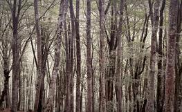 Fotografia d'un bosc frondòs.
