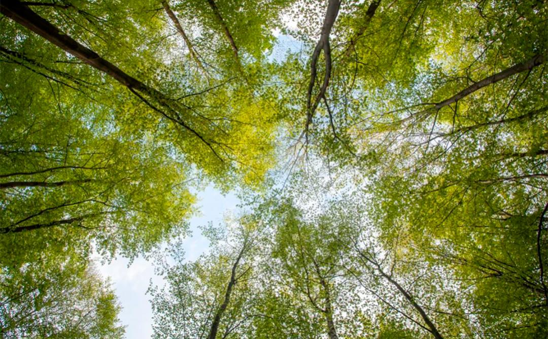 Plano árboles bosque